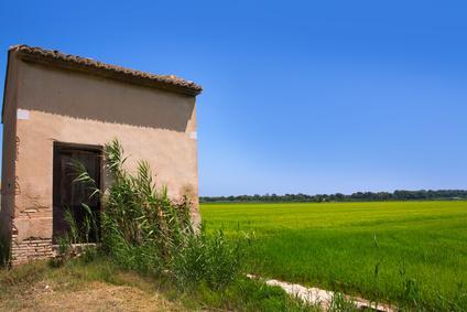 Rice fields outside Valencia