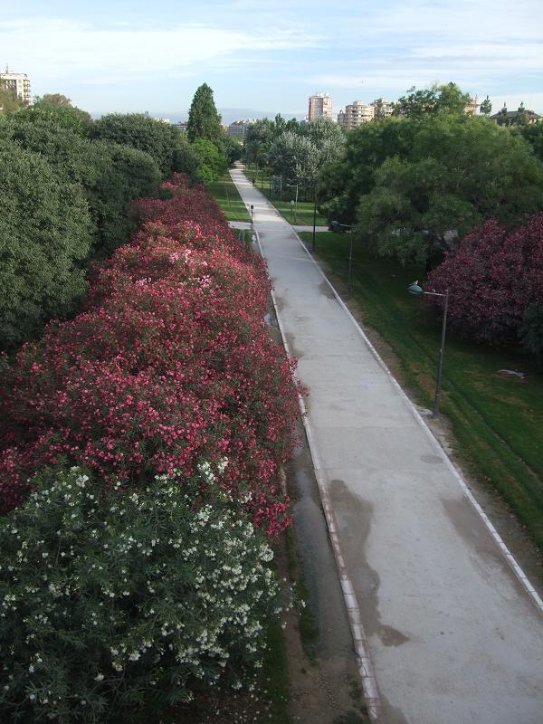 Jardines del Turia  im alten Flussbett des Turia befindet